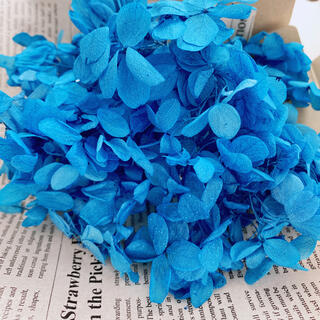 【花材】アジサイ ブルー(ドライフラワー)