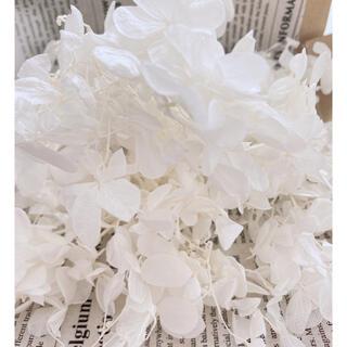 【花材】アジサイ ホワイト(ドライフラワー)