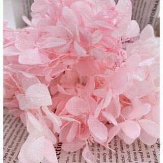 【花材】アジサイ ピンク(ドライフラワー)