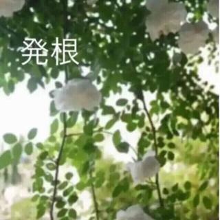 B(ᵔᴥᵔ)♡アルベリックバルビエ♡可愛いお庭♡(ホワイトガーデン アンティーク(その他)