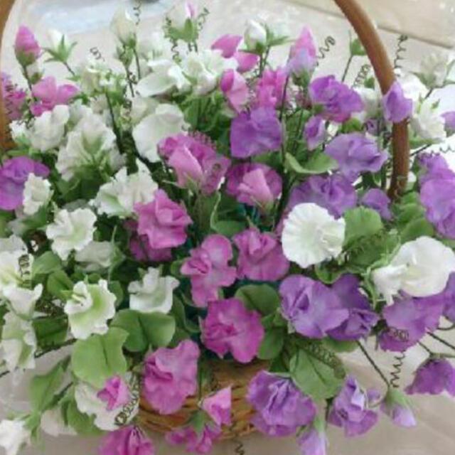 スイートピー花の種 ハンドメイドのフラワー/ガーデン(その他)の商品写真
