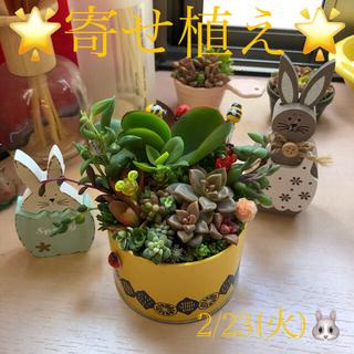 多肉植物❤︎寄せ植え❤︎このまま飾れます❤︎イエロー缶♪(その他)