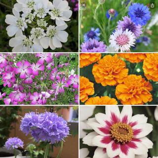 お花の種 色々セット🌼(その他)