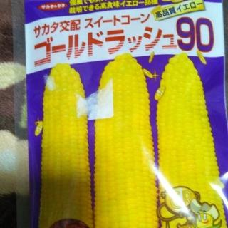 とうもろこし種(ゴールドラッシュ)30粒+おまけ10粒(野菜)