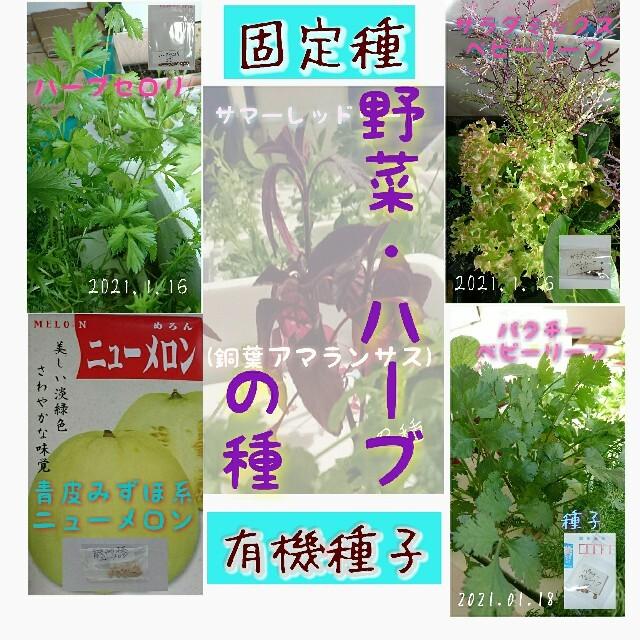 固定種 5点セット 野菜の種 ハーブの種 水耕栽培 家庭菜園 エディブルフラワー 食品/飲料/酒の食品(野菜)の商品写真
