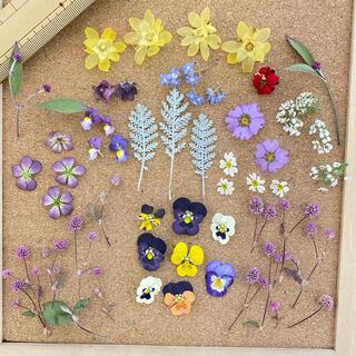 (91)小さなお花のドライフラワー MIXセット(ドライフラワー)