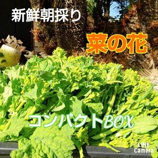 新鮮朝採り【菜の花】農薬不使用
