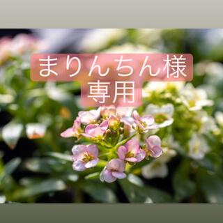 アリッサムセット(野菜)