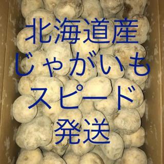 北海道産 新じゃが じゃがいも 男爵 大特価 サイズM 約10kg