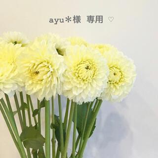 セザンヌケショウヒン(CEZANNE(セザンヌ化粧品))のayu* 様 専用 ☺︎(化粧下地)