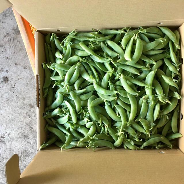 【鹿児島産】甘塩スナップエンドウ箱込み4キロ^_^ 食品/飲料/酒の食品(野菜)の商品写真