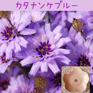 折紙のような可愛さ♡『カタナンケブルー』花の種10粒(その他)