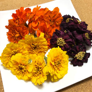 フレンチマリーゴールド サザンカ ドライフラワー 花材 素材 ビタミンカラー B(ドライフラワー)