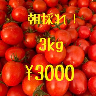 宮崎県産 完熟ミニトマト 3kg