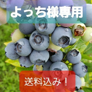 ★よっち様専用 完熟冷凍ブルーベリー【中粒〜大粒】5㌔(フルーツ)