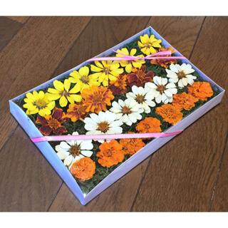 100円お値引き‼️銀の紫陽花が作ったジニアとマリーゴールドのドライフラワー(ドライフラワー)