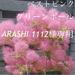 ARASHI1112様専用 ベストピンク グリーンボール (ドライフラワー)