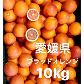 愛媛県 ブラッドオレンジ 小玉 10kg(フルーツ)
