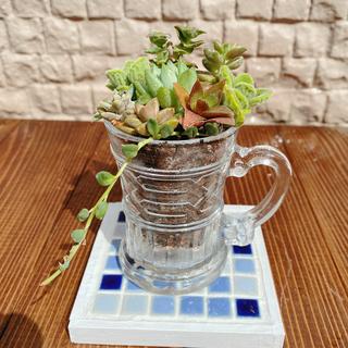 多肉植物寄せ植え アンティーク風グラス(その他)