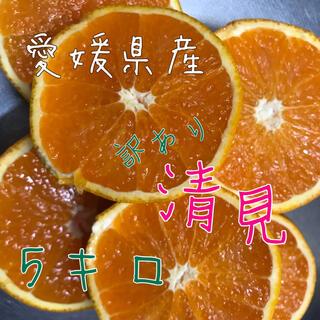 愛媛県産 清見 不知火(フルーツ)
