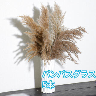 花束 ブーケ ウェディング ドライフラワー パンパスグラス ウェルカムスペース(ドライフラワー)