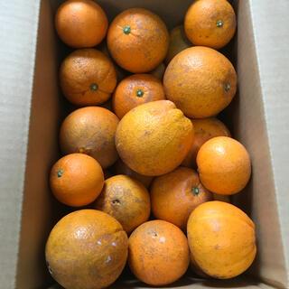 静岡三ヶ日産ネーブルオレンジ10キロ(フルーツ)