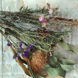 ①ネイティブフラワー 花材 ドライフラワー ピンクッション グレベリア 他(ドライフラワー)