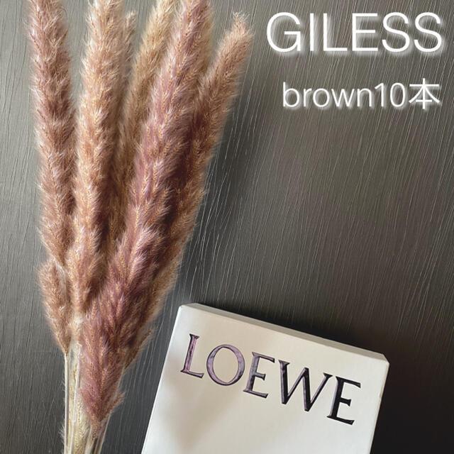 パンパスグラス テールリード ドライフラワー ブラウン 花材 インテリア 韓国 ハンドメイドのフラワー/ガーデン(ドライフラワー)の商品写真