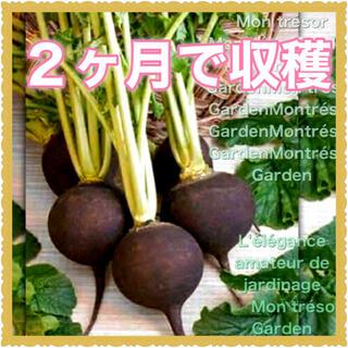 10粒 ブラック大根【野放し・手間いらず】種・有機種子・固定種 (野菜)