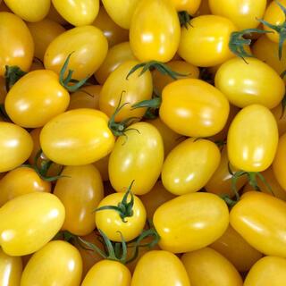 新鮮 完熟 イエローアイコ 3.5kg(野菜)