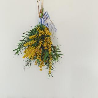 2021 mimosa 17 ギフトミモザ・ティーツリーのスワッグ(ドライフラワー)