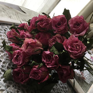 Kenya Rose ピンクダイアモンド ドライフラワー (ドライフラワー)