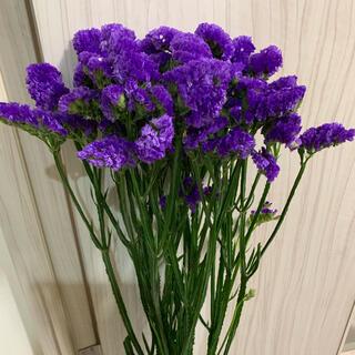 スターチス[紫](ドライフラワー)
