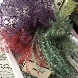 染めススキ ドライフラワー  花材インテリア(ドライフラワー)