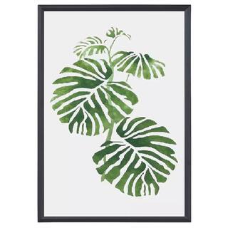 ポスター 060 フレーム付 植物 ボタニカル モンステラ1(フォトフレーム)