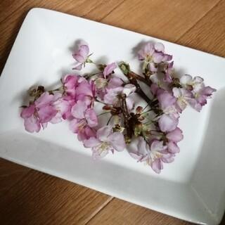 1セット限定枝付き桜ドライフラワー②(ドライフラワー)