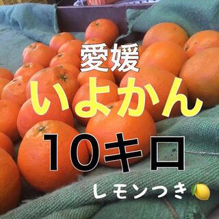 伊予柑10キロ  レモンつき!(フルーツ)