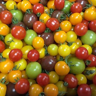 カラフルミニトマト 3kg