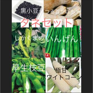 珍しいタネセット 数量限定お早めに!(野菜)