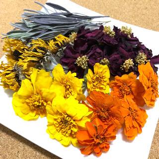 フレンチマリーゴールド サザンカ ひまわり 花材 素材 ビタミンカラー C(ドライフラワー)