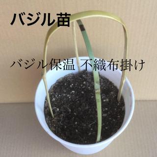 バジル苗   バジル保温 不織布掛け「 ポット竹支柱 」(野菜)