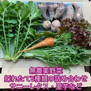 無農薬野菜*採れたて5種類などの詰め合わせ*サニーレタス・里芋など*野菜セット*(野菜)