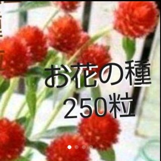 お花の種 250粒set(その他)