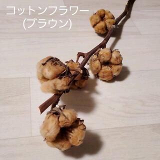 枝付き♪コットンフラワー(ブラウン) 綿の木 ドライフラワー(ドライフラワー)