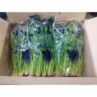 取りたてほうれん草 3kg(野菜)