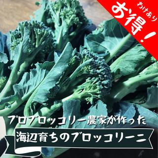 海辺育ちのブロッコリーニ 440~460g(野菜)