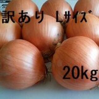 訳あり北海道産玉ねぎ 20kg Lサイズ(野菜)