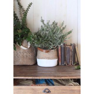 ACTUS - 植木鉢🍋新品 アンティークデザイン プランター 鉢2点セット