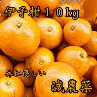 愛媛県産 伊予柑 いよかん セット(フルーツ)