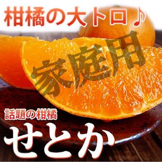 家庭用【せとか】Lサイズ たっぷり5.5kg♩美味しいせとか!入荷!!(フルーツ)